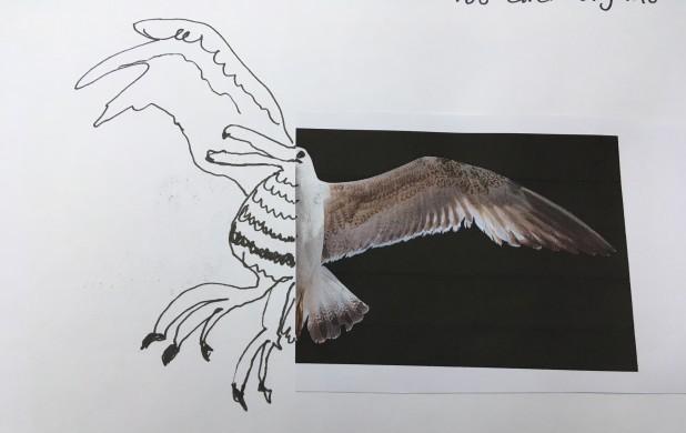 Tegneøvelse 3: Giv fuglen nyt liv